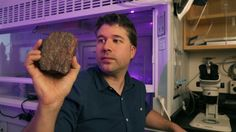 http://www.ctvnews.ca/sci-tech/oldest-record-of-life-on-earth-found-in-quebec-1.3306558