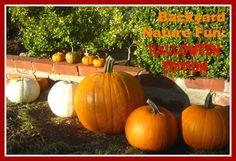 Go Explore Nature: Backyard Nature Fun: Halloween Edition