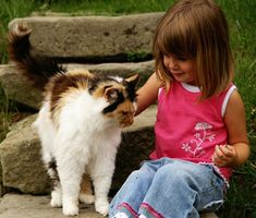 Teach your child how to hold a cat properly