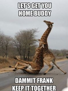 """Dammit Frank two drunk giraffe's walking road street one falls down drunk, Let's get you home buddy, Damn it Frank Keep it together, Don't Drink and Walk The Doctor's Dr Who - The Big Bang TV Show Episode - The Doctor Dancing """"The Drunk Giraffe"""" It's Crazy Dancing, Mystery Solved -- Etsy.com/Shop/ChrisHerndonArt Original Twin Peaks, Dr Who,werewolves, curse of werepug, were pug, werewolf creature from black lagoon, frankensteins bride, monsters ARTWORK Christopher Herndon February 2015"""