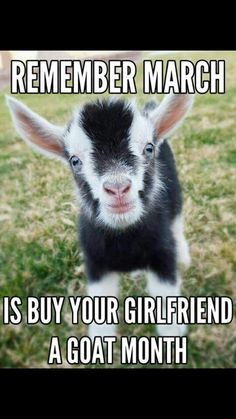 Yes...#babygoatfarm