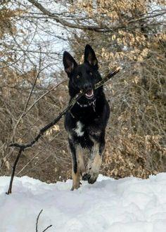 beautiful dog enjoying the snow
