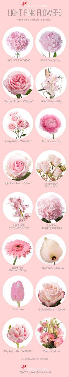 A list of favorite light pink flowers to inspire you to design something beautiful for your wedding!