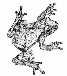 Used to be pretty good at pointillism. Should whip out the old art supplies. Time Tattoos, Body Art Tattoos, I Tattoo, Tribute Tattoos, Frog Tattoos, Book Page Crafts, Great Tattoos, Old Art, Black Tattoos