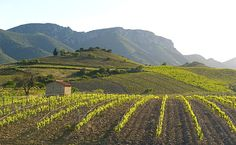 Alte Stöcke & junge Ideen: die aufregenden Weine des Vallée d'Agly