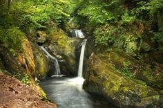 Ingleton Falls, Yorkshire / waterfalls into a canyon