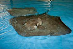 Sting Rays! (photo by @Lydia Woosley - www.lydiawoosley.com )