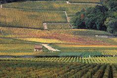 Les climats de Bourgogne en France