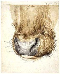 Albrecht Dürer, Muzzle of an ox seen from the front , ca. Watercolour and bodycolour. The British Museum Renaissance Kunst, Renaissance Artists, Animal Paintings, Animal Drawings, Art Drawings, Albrecht Durer, Gouache, Zoo 2, Cow Art