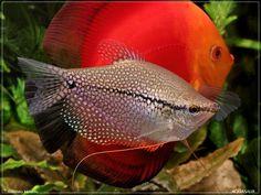 amazing-fish.jpg 1,024×768 pixels