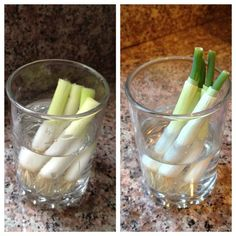 HOW TO: Regrowing vegetables in a glass.
