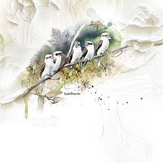 kookaburras-by-mum2gnt - Oscraps Gallery