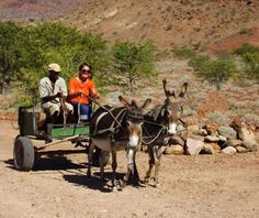 Loved my donkey cart ride @ Tsubes Camp, Damaraland. #donkeycart #roads #namibia #2x2 Photo: Jessie Vermeulen J Poppy Flower Painting, The Donkey, African Art, Poppies, Remote, Beautiful Pictures, Horses, Vroom Vroom, Route 66