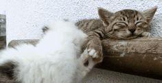 Deeeeep sleep