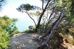 Vegetazione scattata da un sentiero sul Monte Conero. #conero #rivieradelconero #tourism #monteconero #parcodelconero   #parchi  #naturalpark  #italy   passo del lupo      photo@massimopaolucci