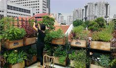 Jardín comestible semi-vertical en patio pequeño