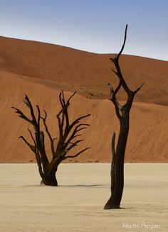 http://www.printedart.com/content/dead-vlei-namibia    Martin Heigan: Dead Vlei Namibia    Available with acrylic finish for a float-on-the-wall display in sizes up to 33 x 45 inches.    Petrified Camel Thorn Trees (Acacia erioloba) in the Salt pan at Dead Vlei (Sossusvlei, Namib Naukluft Park, Namibia).