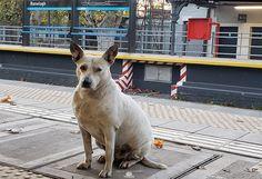 Como todo perro seguramente extraña a quien le da atención, cariño y alimento estamos en cuarentena Junio 2020 en Ranelagh y los animales supongo como las personas extrañamos el volver a la vida normal y  actividades diarias Kangaroo, Corgi, Daily Activities, June, Buenos Aires, Parks, Dogs, Animales, Baby Bjorn