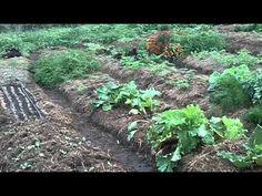 Vidéo sur jardin permaculture