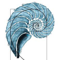 Fibonacci - nautilusYou can find Nautilus and more on our website. Nautilus Tattoo, Fibonacci Tattoo, Shell Drawing, Painting & Drawing, Golden Ratio Tattoo, Fibonacci Golden Ratio, Hokusai, Urban Threads, Math Art
