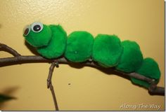 Pom Pom Caterpillar on a Twig. Put these on a poster?  And have kids crafts as butterfly part to finish?