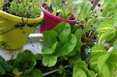 backoffice&more - Projekte - Nahversorgung Region Elsbeere Wienerwald - vertical gardening Gardening, Planter Pots, Vegetables, Projects, Lawn And Garden, Vegetable Recipes, Veggies, Horticulture