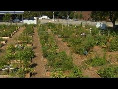 Great video segment on Chicago's Peterson Garden Project (community garden).   Interview by P. Allen Smith with the garden's founder, LaManda Joy.   #gardening