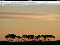 Gum Tree Silhouettes