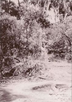 The Corroboree Rock Spirit, 1959