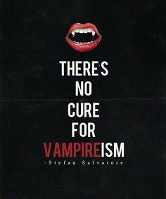 The Vampire Diaries - Stefan Salvatore Vampire Quotes, Tvd Quotes, Vampire Diaries Quotes, Vampire Diaries Cast, Vampire Diaries The Originals, Vampire Love, Vampire Art, Vampire Kiss, Stefan Salvatore