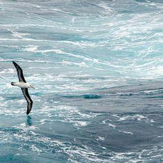 Wie heißt das sauberste Meer der Welt? Weddell-meer Eisbedecktes und Eisbergen bedeckt  Weddel-meer ist das sauberste Meer der Welt. Es ist Teil des Antarktischen Ozeans, vor der Küste der Antarktis.