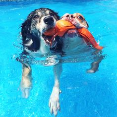 These dogs are making a splash!