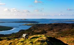 Sky Road Scenic Route Map and Guide, Clifden, Connemara, Co. Galway, Wild Atlantic Way Connemara, Clifden Ireland, Ireland Travel Guide, Irish Landscape, County Clare, Dublin Ireland, Stunning View, Beautiful, Travel Inspiration