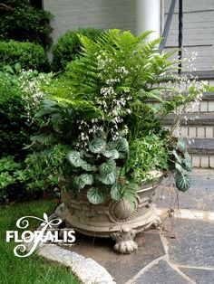 Permanently-Planted Container by Floralis Permanently-Planted Container by Flor… - Pflanzideen Outdoor Flowers, Outdoor Planters, Garden Planters, Outdoor Gardens, Container Flowers, Container Plants, Container Gardening, Interior Exterior, Shade Garden