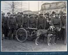 I believe this was for publicity purposes during the Fifth Liberty Loan drive of 1919 taken in Washington D.C. The Belgians used dogs frequently in WWI to pull their machine gun units.