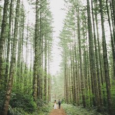 Wedding in the woods - Laura & Nick's elopement, set in the Cascade Mountains just east of Seattle and captured by photographer Benj Haisch   via Hither & Thither blog #BenjHaisch #Hither