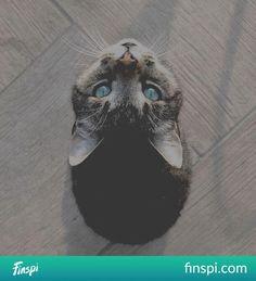48f25848b60bde Najlepsze obrazy na tablicy Koty (151) w 2016 | Kocham koty, Koty i ...