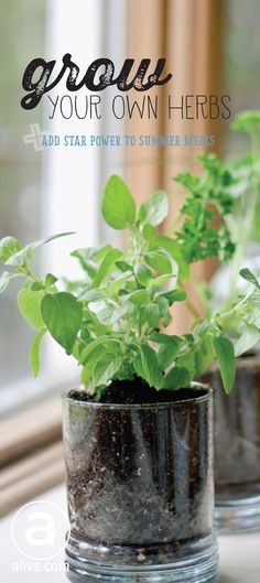 Fresh herbs pack more punch than their dried counterparts, bolstering the look and taste of a whirlwind of dishes. So why not grow your own? Flavourful favourites like mint, thyme, parsley and dill make for low-maintenance garden additions and can easily be cared for using these simple tips. Grow forth and conquer! #gardening #growingherbs #growyourown