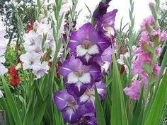 - The social network for meeting new people Silk Flowers, Colorful Flowers, Small Farm, Farm Gardens, Outdoor Plants, Meeting New People, Tulips, Floral Wreath, Landscape