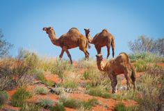 Aussie deserts: Our outback scenes - Australian Geographic (photo credit: Nick Rains)