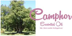 Camphor Essential Oil. See the properties, uses and benefits of camphor essential oil.