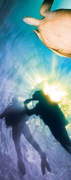 Caribbean - scuba diving - turtle - sea #junkydotcom