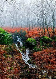 Cáceres (Extremadura) - Otoño en el valle del Jerte