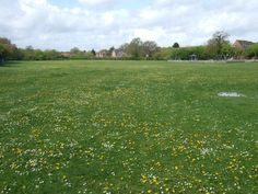 English meadows