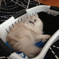 """@Valerie Khoo's photo: """"Came home to find kitty Rexy doing the laundry."""""""