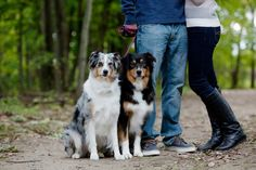 Engagement photo outdoors with dogs
