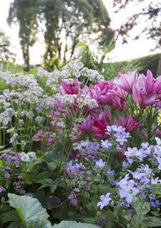 Good color combinations:different pastels Dry Garden, Moss Garden, Terrace Garden, Beautiful Flowers Pictures, Amazing Flowers, Garden Landscape Design, Garden Landscaping, Pergola, Good Color Combinations