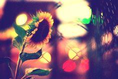 Sunny Spring #shaylaBOOM