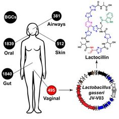 Bacteria Make Drug-Like Molecules in Humans: Over 14,000 biosynthetic Gene Clusters for Small Molecules Identified