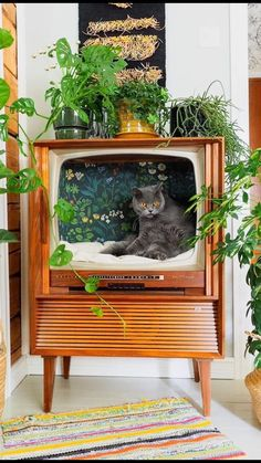 Repurposed old TV used as a cat chillatorium (by Keltainen kahvipannu) : aww Flea Market Decorating, Cat Room, Aesthetic Rooms, Cat Furniture, Diy Furniture Renovation, Diy Furniture Cheap, Diy Furniture Hacks, Barbie Furniture, Kitchen Furniture